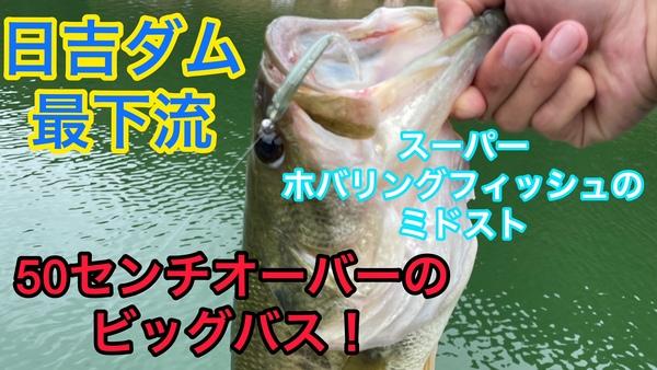葛の葉店スタッフ 日吉ダム釣果情報 【2021年10月13日】サムネイル